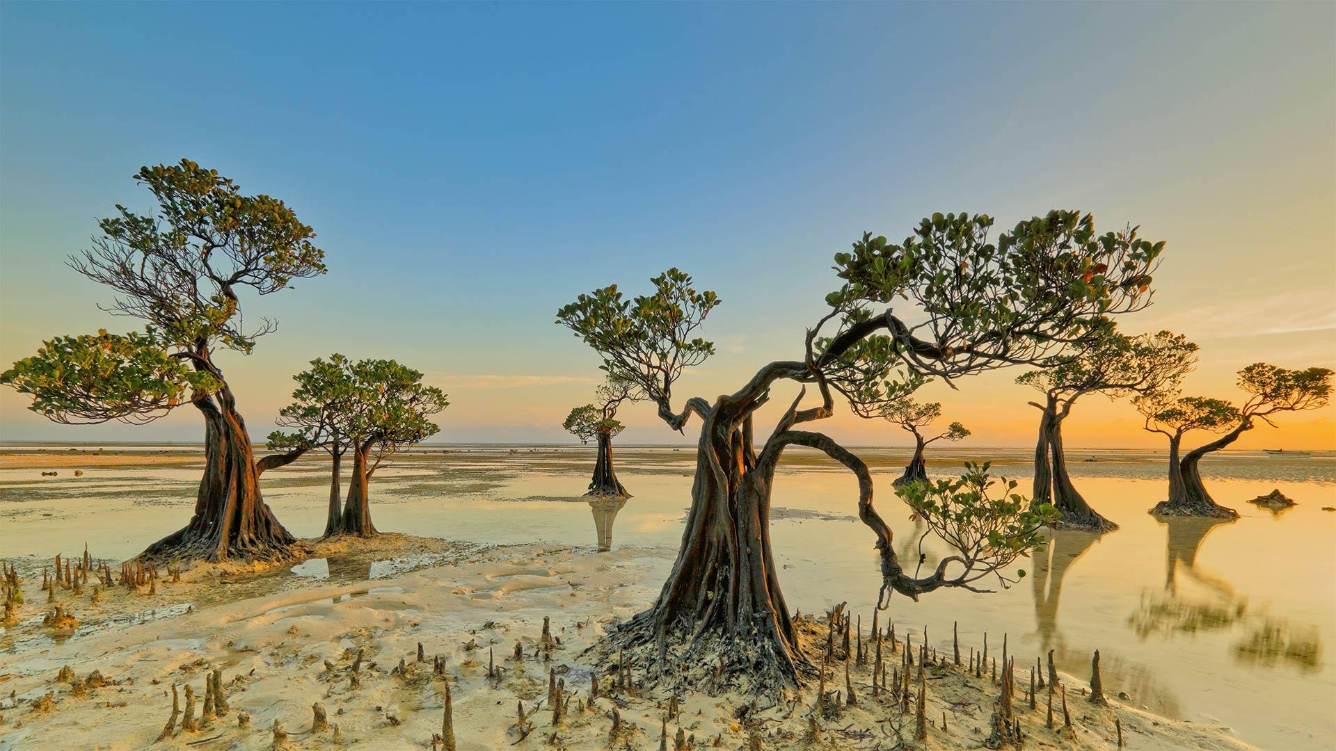 Mangrove trees, Walakiri Beach, Sumba island, Indonesia (? Tengguo Wu/Getty Images)