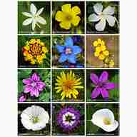 Flower promo codes