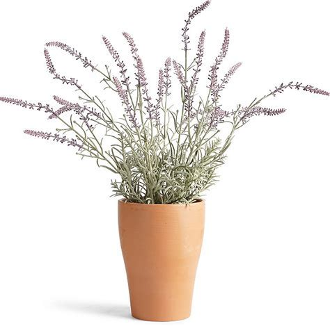 outdoor potted plants for patio