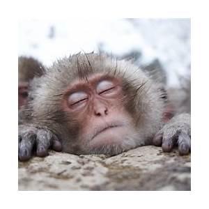 welcome-to-snow-monkey-resorts-nagano-japan image