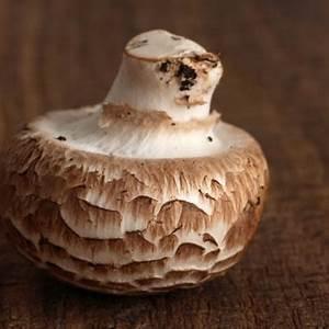 mushroom-sausage-strudel-recipe-house-home image