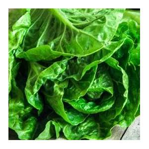 11-best-lettuce-recipes-popular-lettuce image