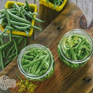 pickled-green-beans-recipe-lacto-fermented-the-prairie image