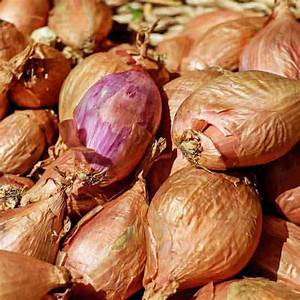 cooking-with-shallots-3-simple-shallot-recipes-real image