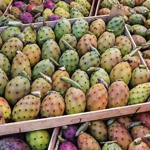 guide-to-making-prickly-pear-jelly-the-spruce-eats image